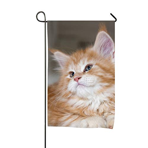 Animal Cats Baby Kitten United States Decorative Garden Flags - Weather Resistant & Double Stitched - 18 x 12 Inch