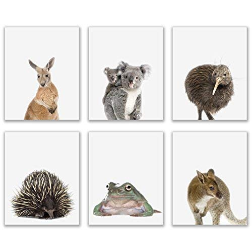 - Crystal Baby Outback Animals Poster Prints - Set of 6 (8x10) Adorable Furry Australian Portraits Wall Art Nursery Decor - Red Kangaroo - Kiwi - Green Tree Frog - Echidna - Koala - Wallaby