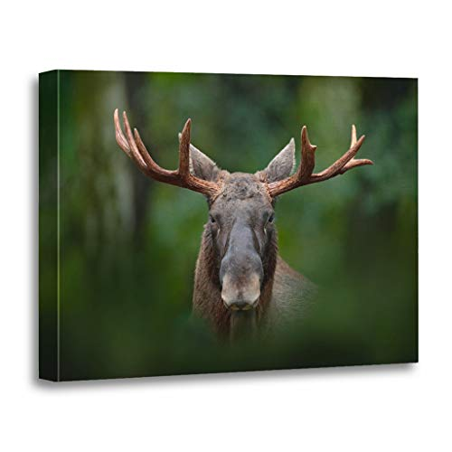 Emvency Painting Canvas Print Wooden Frame Artwork Detail Portrait of Elk Moose Alces in The Dark Forest During Rainy Day Decorative 12x16 Inches Wall Art for Home Decor (Elk Portrait)