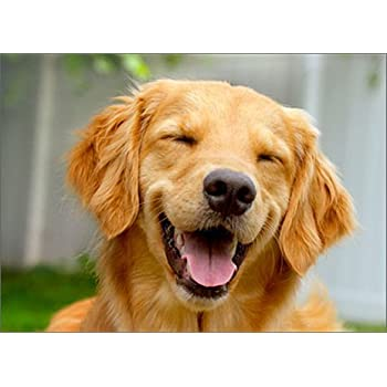 Amazon Com Smiling Golden Retriever Avanti Funny Dog Birthday