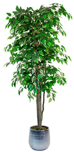 Maia Shop Ficus Artificial con Troncos Naturales, 180 cm, Materiales Mixtos