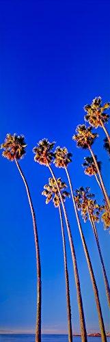 Posterazzi PPI164949 Palm trees near the beach Santa Barbara California USA Poster Print 6 x 18 (Best Beaches Near Santa Barbara)