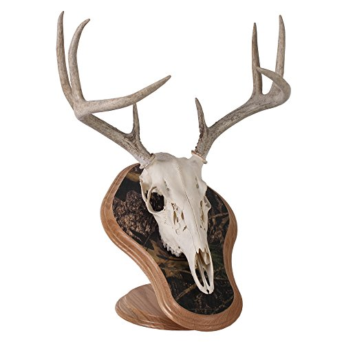 - Walnut Hollow Country Deluxe Euro Skull Display Kit, Oak with Camo