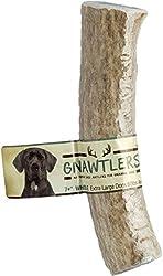 "Gnawtlers - Premium Elk Antlers For Dogs, Naturally Shed Elk Antlers, USA Natural Elk Antler Chews, Specially Selected Elks Antlers From The Rocky Mountain & Heartland Regions - 7""+ XL Elk Antler"