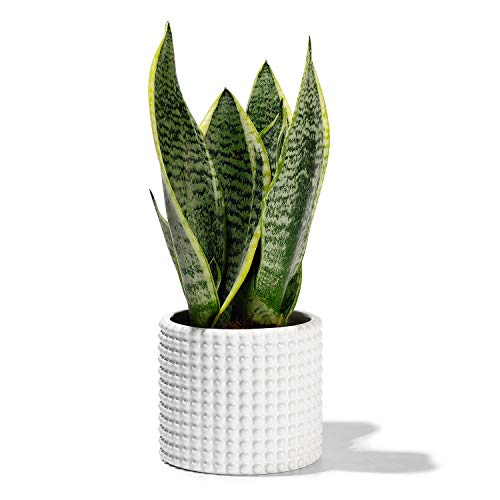 White Planter Pots for Plants Indoor – 4.8 Inch Ceramic Vintage-Style Hobnail Textured Flower Pot with Drainage Hole for…