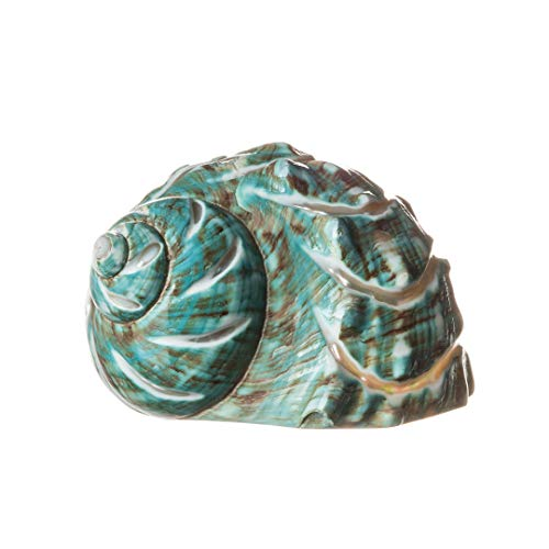 Nautical Crush Trading Polished Jade Green Turbo Shell | 3.5