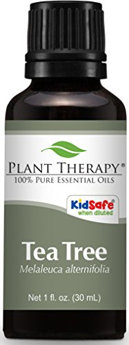 Cypress Pine Tree - Plant Therapy Tea Tree (Melaleuca) Essential Oil. 100% Pure, Undiluted, Therapeutic Grade. 30 ml (1 oz).