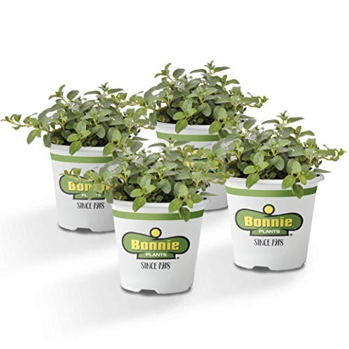 Bonnie Plants Peppermint Live Edible Aromatic Herb Plant - 4 Pack, Pet Friendly, Low Light, Part Shade, Great for Indoors