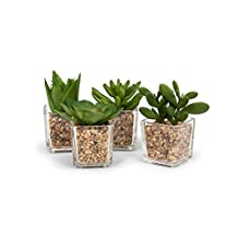 Abbott Collection Home 27-MOJAVE/04 Set of 4 Green Succulents in Square Pot