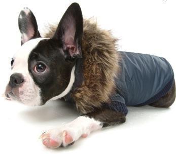 Army Barmy Dog Jacket Navy (XL)