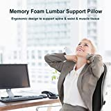 Newgam Lumbar Support Pillow/Back Cushion,Memory