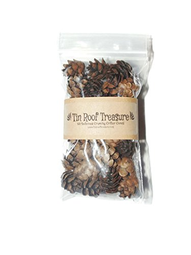 Pack of 50 Organic Miniature Pine Cones Pet Critter - Miniature Critters