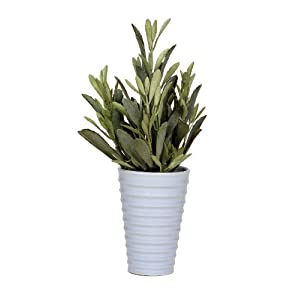 House of Silk Flowers Artificial Jade Plant in Ceramic 64