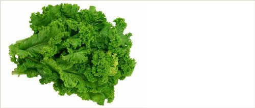 Mustard Greens Seeds- Southern Giant Curled- 500+ (Curled Mustard)