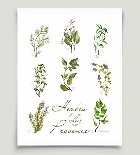 French Watercolor Herbs Art Herbes de Provence Basil Oregano Rosemary Unframed Paper Print (Provence Border)