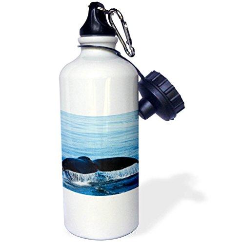 3dRose Danita Delimont - Whales - Water flows off a humpback whales tail as it dives, B.C., Canada - 21 oz Sports Water Bottle (wb_277198_1) by 3dRose