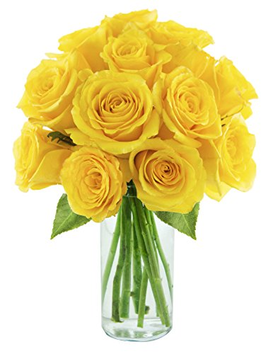KaBloom Bouquet of Sunshine Yellow Roses: 12 Fresh Cut Yellow Roses (Long Stemmed)