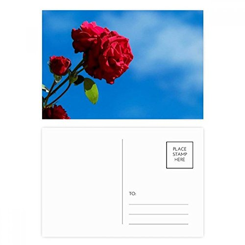(Blue Sky Red Roses Green Leaves Postcard Set Birthday Thanks Card Mailing Side 20pcs)
