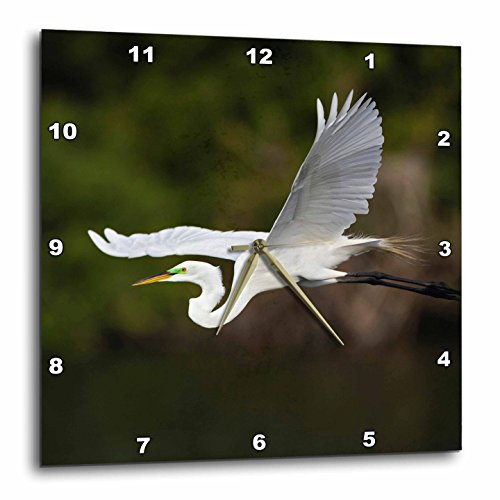 3dRose dpp_89016_3 Great Egret Bird in Flight, Sanibel Island, Florida-Us10 Aje0244-Adam Jones-Wall Clock, 15 by - Sanibel Florida Outlets
