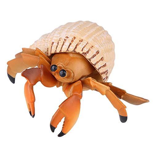 - Hermit Crab Toy Educational Simulation Animal Marine Biological Model Realistic Gift Prop for Kids Child Learning