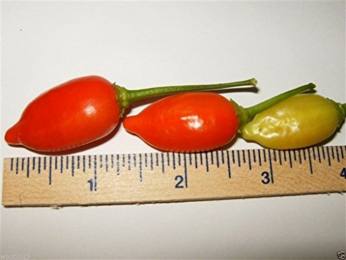 20 Pepper Seeds (Inca Red Drop, Pepper (20 Seeds) Aromatic, Fruity , Great for Pickling, Organic !)