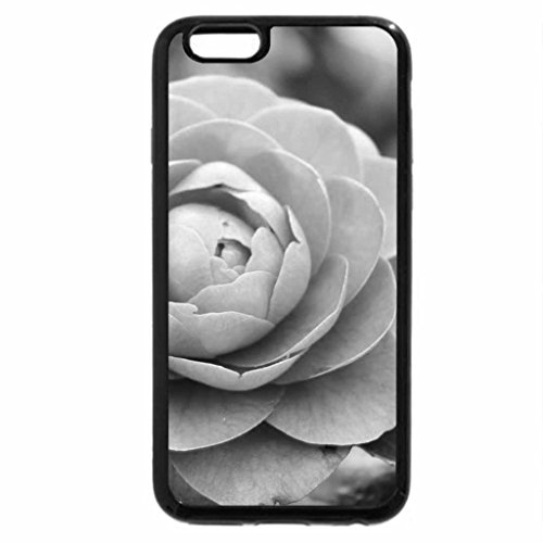 iPhone 6S Plus Case, iPhone 6 Plus Case (Black & White) - A Pretty Pink Camellia Rose