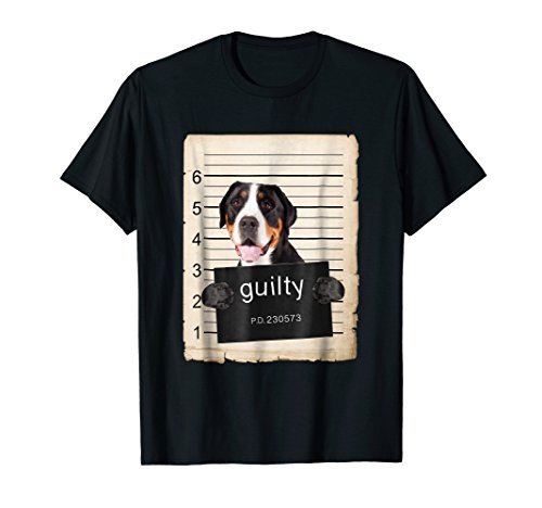 Greater Swiss mountain Dog mug shot bad dog ()