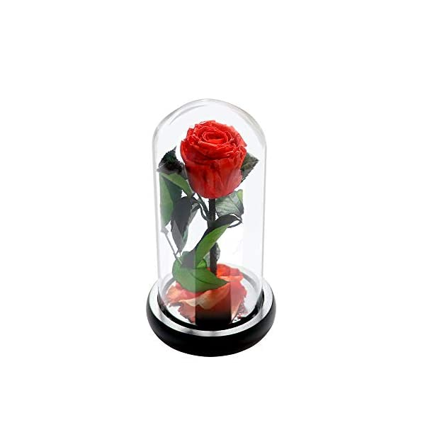 COOAK Beauty and The Beast Real Rose Real Enchanted Rose Preserved Real Rose 100% Real Rose Flower Never Withered Forever Gifts for Christmas, Valentine's Day, Wedding Anniversary, Birthday