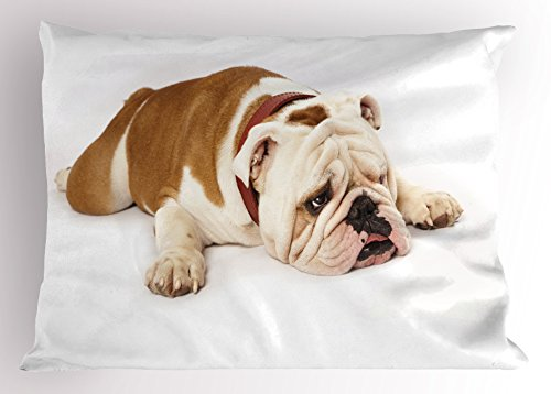 Ambesonne English Bulldog Pillow Sham, Sad and Tired Bulldog Laying Down European Pure Breed Animal Photography, Decorative Standard King Size Printed Pillowcase, 36 X 20 inches, Cream Brown by Ambesonne