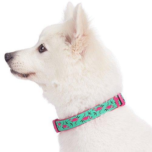 Blueberry Pet Collar Para Perro 457 A 66 Cm Diseno De Flamenco Rosa