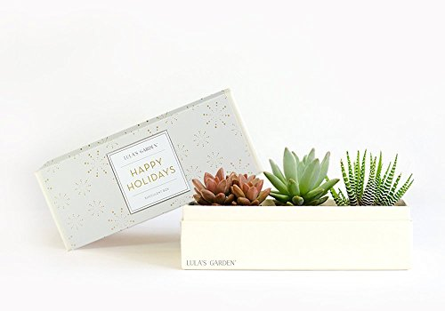 Live Succulent Garden Centerpiece with Happy Holidays Gift Box - Perfect and Unique Gift for Wife, Mom, Friend, Co-workers, Boss or Teacher (Jewel Garden, Happy Holidays) (Garden Gifts Unique)