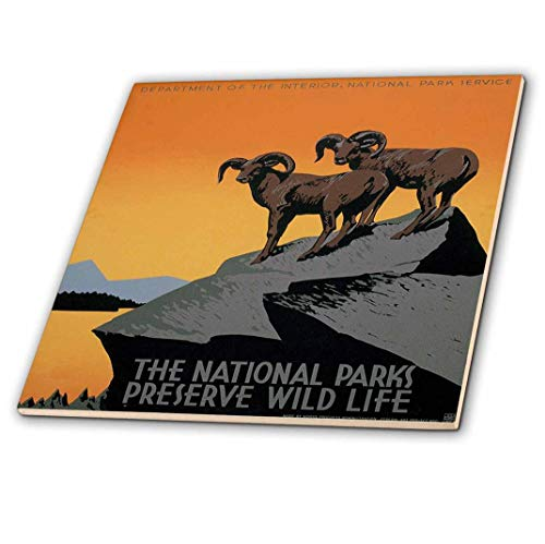 3dRose ct_171294_4 The National Parks Preserve Wild Life with Two Longhorn Sheep Ceramic Tile, 12