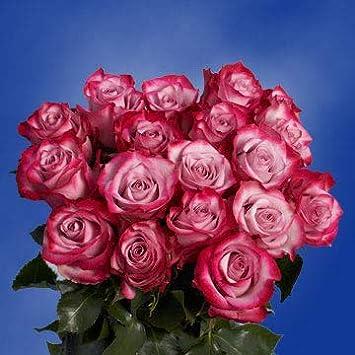 Amazon Globalrose 50 Purple Roses Large Bloom Roses Fresh