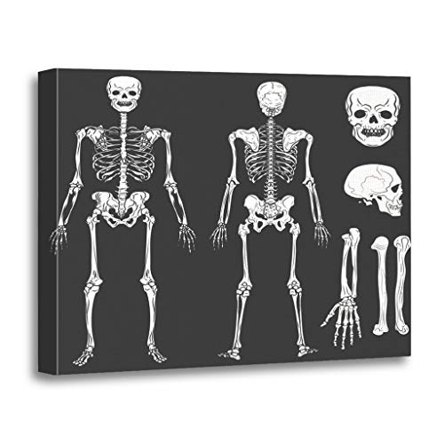 Emvency Painting Canvas Print Wooden Frame Artwork Back Human Body Skeleton Bones and Joints Flat Front Decorative 24x32 Inches Wall Art for Home Decor