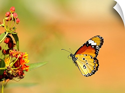 Canvas On Demand Wall Peel Wall Art Print entitled Butterfly. (Capital 48 Inch Natural)