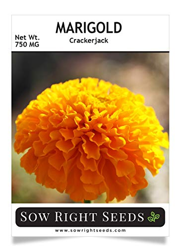 Sow Right Seeds Crackerjack Marigold Seeds - Full Instructions for Planting, Beautiful to Plant in Your Flower Garden; Non-GMO Heirloom Seeds; Wonderful Gardening Gift (1)