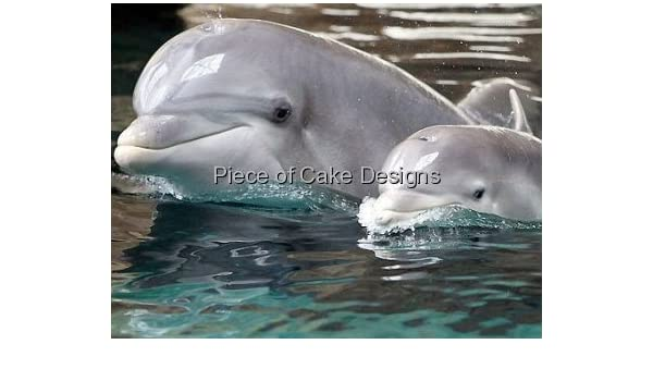 Amazon 3 Round Dolphin With Her Baby Birthday Edible Image Cake Cupcake Topper Dessert Decorating Toppers Grocery Gourmet Food