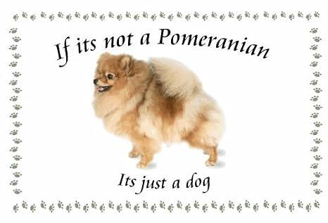 Pomerania - diseño de Llaveros de perro - Si su no: Amazon ...