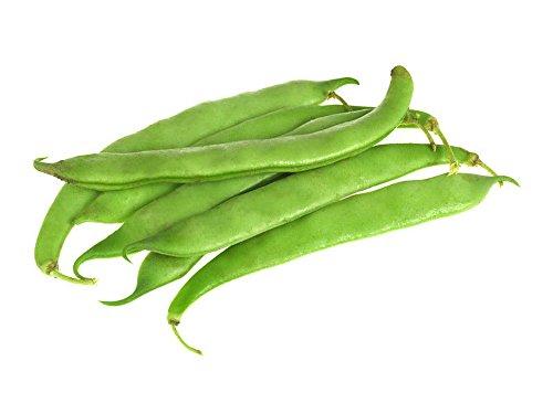 White Half Runner Bush Bean - 400+ Seeds - VALUE PACK! (Runner White Half Beans)