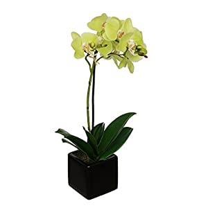 House of Silk Flowers Fake18-inch Baby Orchid in Black Cube 41