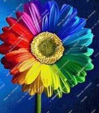 100 Unids/bolsa Mezcla de semillas de margaritas arcoiris, semillas de crisantemo, semillas de flores raras, crecimiento natural para la plantación de jardines domésticos: Amazon.es: Jardín