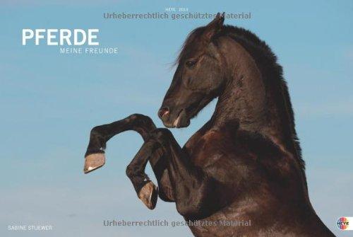 Pferde. Meine Freunde 2013