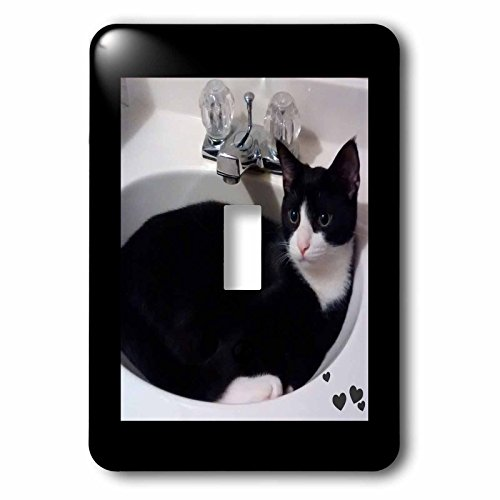 Charlyn Woodruff - CW Designs - Cat Photography - Cute Cat Lovers Black White Tux Cat Curled up in Sink - Light Switch Covers - single toggle switch (lsp_242427_1) by 3dRose