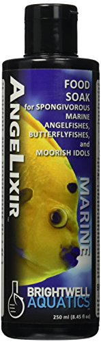 Marine Angel Fish - 1