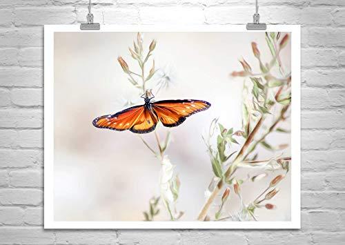 Queen Butterfly Photo Art Print