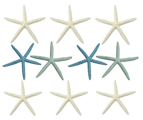 The Seashell Company Finger (Pencil) Starfish Mix - 10 Large Pieces 6-8