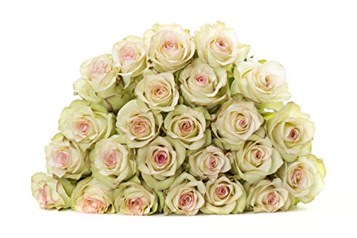 Martha Stewart Roses by BloomsyBox - Two Dozen Light Green & Pink Crazy Diamond Roses Selected by Martha and Hand-Tied, Long Vase Life