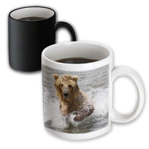 3dRose mug_45697_3 Brown (Grizzly) Bear Cub Chases Salmon in The Brooks River Katmai National Park, Alaska Magic Transforming Mug, - Grizzly Pic Bear