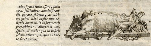 Antique Medical Print-ANATOMIC Instrument-Vesalius-1725