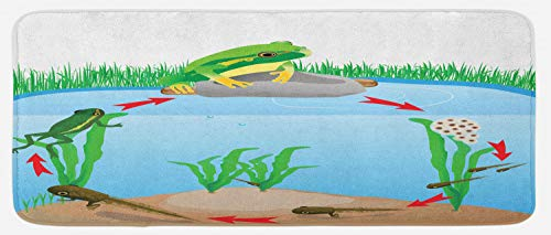 Lunarable Animal Kitchen Mat, Life Cycle of Tropic Tree Frog Presents with Aquatic Elements Evolution in Nature, Plush Decorative Kitchen Mat with Non Slip Backing, 47 W X 19 L Inches, Multicolor